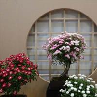 「バラ盆栽」/横浜市役所