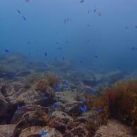 10月11日(日)体験ダイビング in 松江!親友を誘って水中世界を冒険してみました。