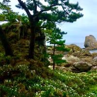 淀の松原と白岩