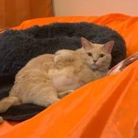 ソファの上の防尿シートの上の猫ベッドの上で。