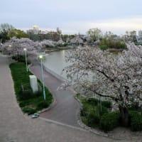 夜風に舞い散る桜花
