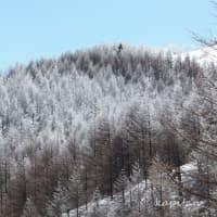 3月の霧氷