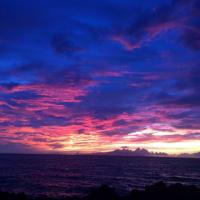 ハワイに戻ってあっという間に2週間〜🌊🐢