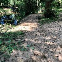 まだミドリ、ドングリの実がなる夏の終わり異常気象の影響か、岸辺の遊歩道の土壌が変貌?