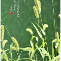 立秋/えのころ草