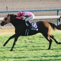 【名馬写真館】幻の牝馬三冠/カワカミプリンセス