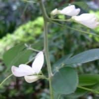 エリア5、エリア6の花