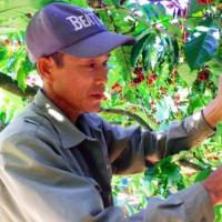 ベトナムのコーヒー輸出は、世界的な逆風で下落!