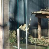 「上野動物園でパンダと...」