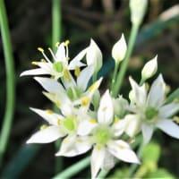 【福寿草】3月 皆さまにも多くの福が。早春に黄金色✨花色アイシャドウ◆