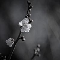 小春燈る、梅の春