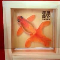 金魚の新しい世界