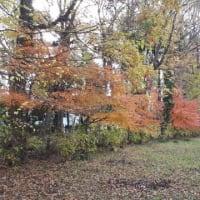 森の図書館周辺 図書館南側の紅葉