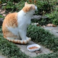 間違いだらけの地域猫活動2