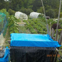 サツマイモの蔓返し・草取り・ダイアジノン散布の続きをしました その後の畑全景
