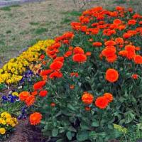 花図鑑143 下江津湖の春