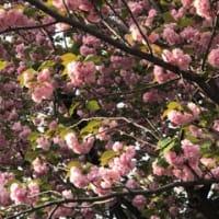 春真っ盛り、教室でミニお茶会
