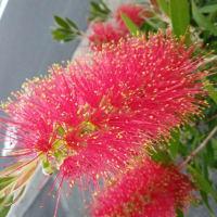 『 花は~花は咲く。コロナがあろうが地震があろうが。前に前に進むのみだ。。。』