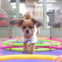 今日は【犬の整体day】  犬のしつけ教室@アロハドギー