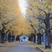 ちょこっとピークを過ぎた・・・東京大学構内のイチョウ並木紅葉