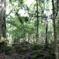 富士山すそ野ウォーク第13回『割石峠~精進湖民宿村』
