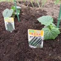 家庭菜園2020 vol.1