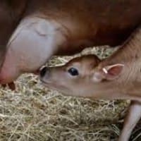 ミルキングアクション milking action の働きを知っておこう。