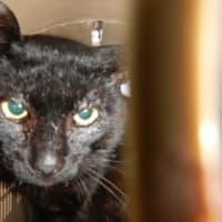飼い主のいない猫3匹避妊と去勢手術