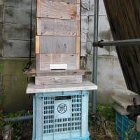 日本ミツバチ巣箱、移動