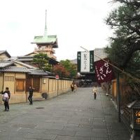 紅葉散策 八坂の塔、高台寺、円山公園、南座まねき上げ、鴨川にユリカモメ飛来