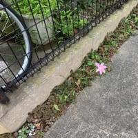 オサンポ walk - 植物plant: そこに独りで I am there alone