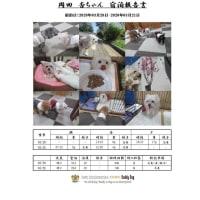 愛犬をケージ(檻)に入れないペットホテル 「杏ちゃん」のお泊り 20/03/21