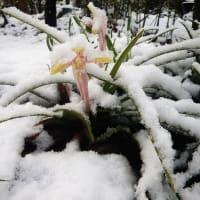 20-04-06 雪の朝
