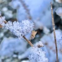 たのしい万葉集 我がやどの君松の木に降る雪の・・・