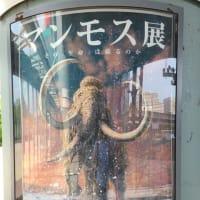 「マンモス展」~その「生命」は蘇るのか~ 2020年大阪展