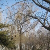 北京・天津紀行(2014年12月~2015年1月)(19)