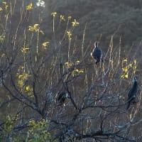 上池の渡り鳥