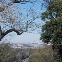 春の鎌倉;台峯・六国見山縦走(4);六国見山山頂から大船駅へ
