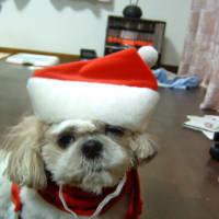 メイちゃんサンタ もうすぐクリスマス