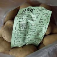 北海道産 馬鈴薯 はるか