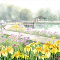 ◆四季の里公園・花菖蒲◆
