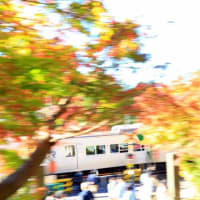 北鎌倉で紅葉流し撮り