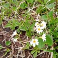 笙ヶ岳下山と咲いていた花