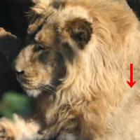 獅子舞のあの模様はどこから来たのか?獅子の源流