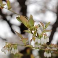櫻工房の春とNHKBS1スペシャル「ウイルスVS人類~未知なる敵と闘うために~」