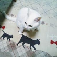 4月19日(金)のつぶやき 黒猫のシッポ押さえてんねん(ФωФ)ノ #白猫 #cat
