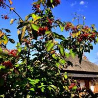 秋の房総の村