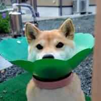 スプラウトで食べたい!