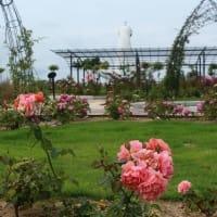 万博記念公園のハス   2019. 07. 15(月) 曇り