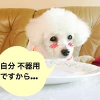 手を使わないと犬食いになっちゃいますよぉ〜